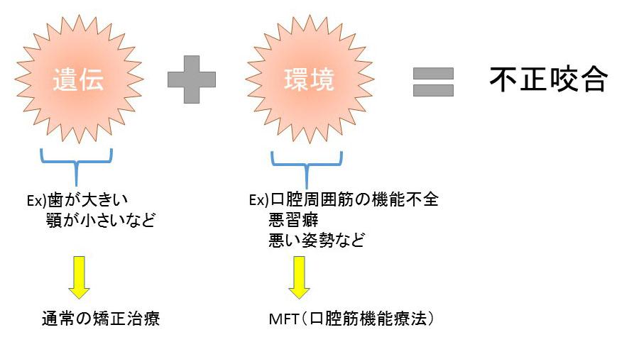 (ブログ) 「MFT(口腔筋機能療法)って何?!」