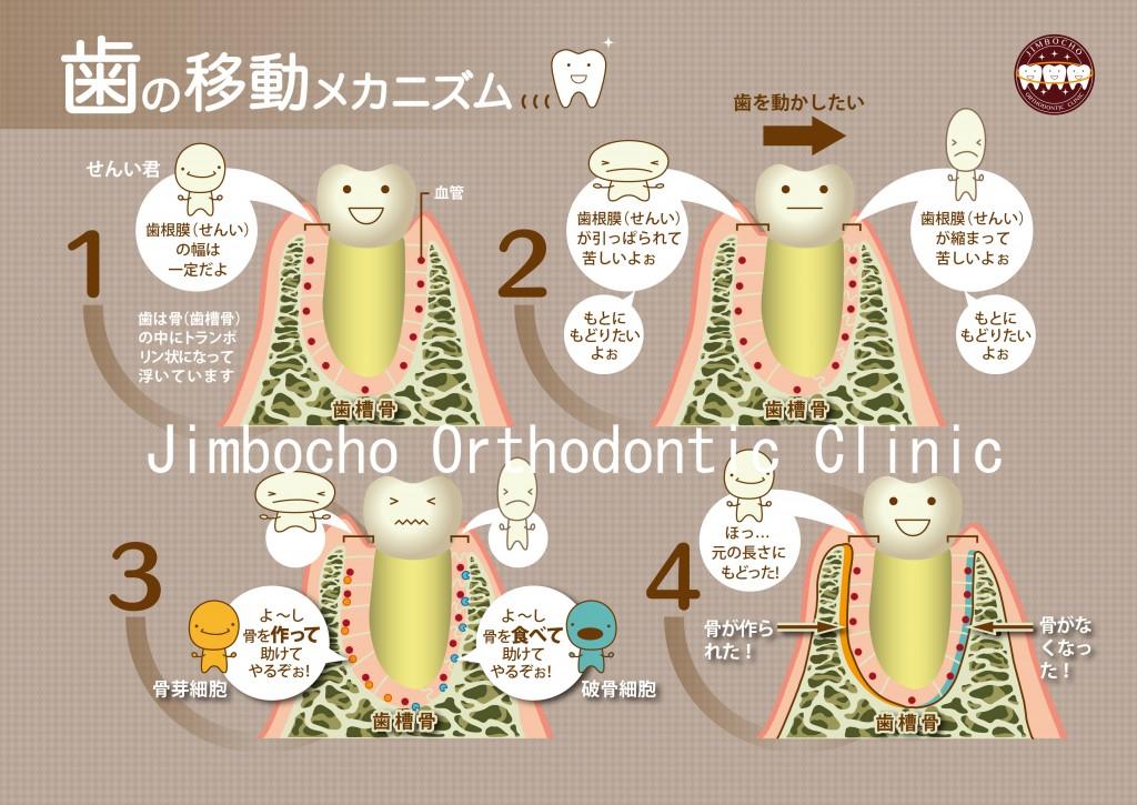 矯正治療で歯が動くメカニズム1ロゴ